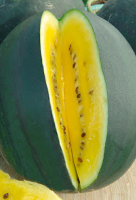arbuz odmiany Janosik