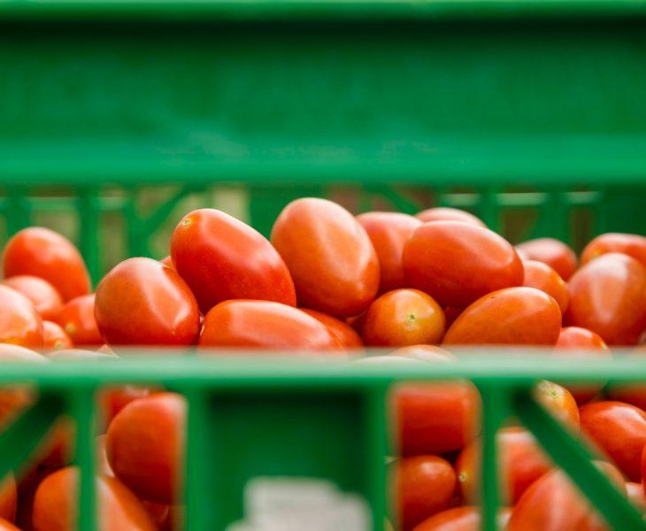 pomidor lima
